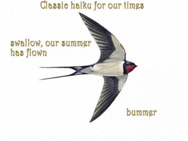 Swallow with haiku